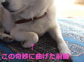 10.3ジョナ家 001.jpg