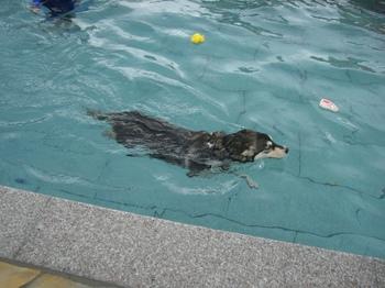13.09水泳部c008.JPG