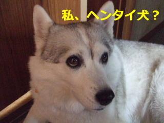 華の顔アップ2.jpg