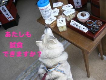 足助/塩座試食.JPG