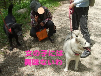 足助/甲斐犬と.JPG