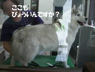 shampoo0003.JPG