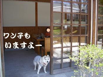 12.4昼神0012.JPG