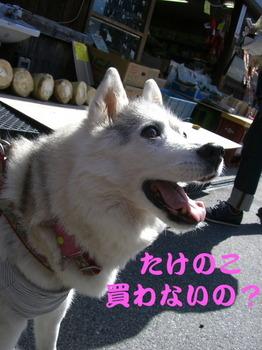 12.4昼神0026.JPG