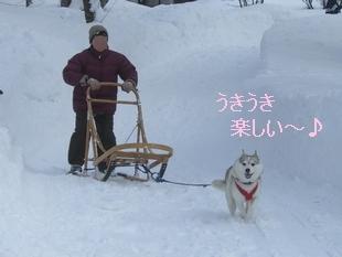 2006.2 高山わんパラ 227.jpg