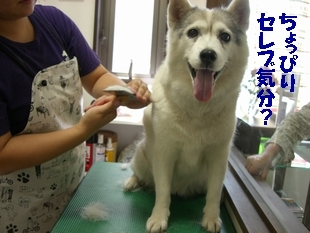 shampoo0004.JPG